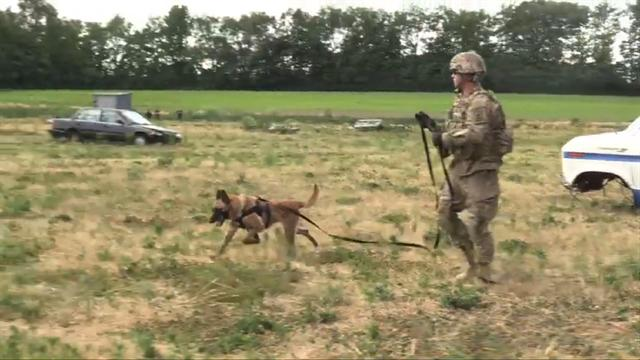 How To Train Two Alpha Dogs