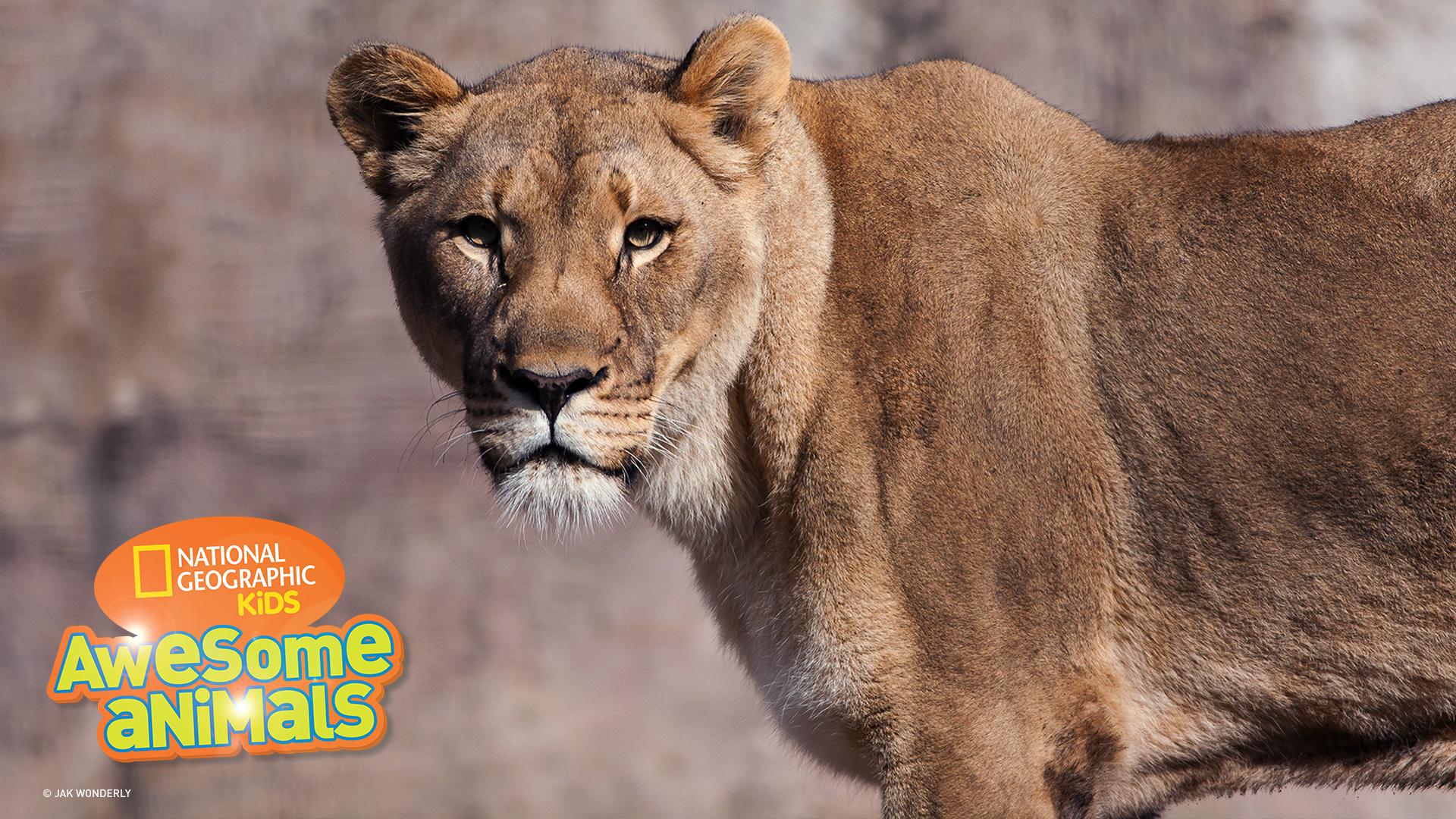 awesome animals s1e10 lion jpg