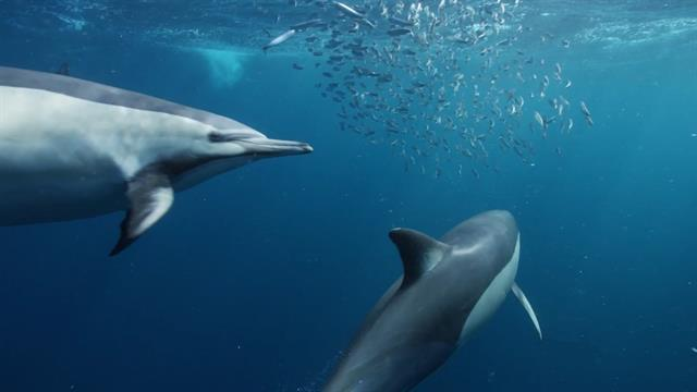 Dolphin Dolphin | Bottlenose Dolphin National Geographic