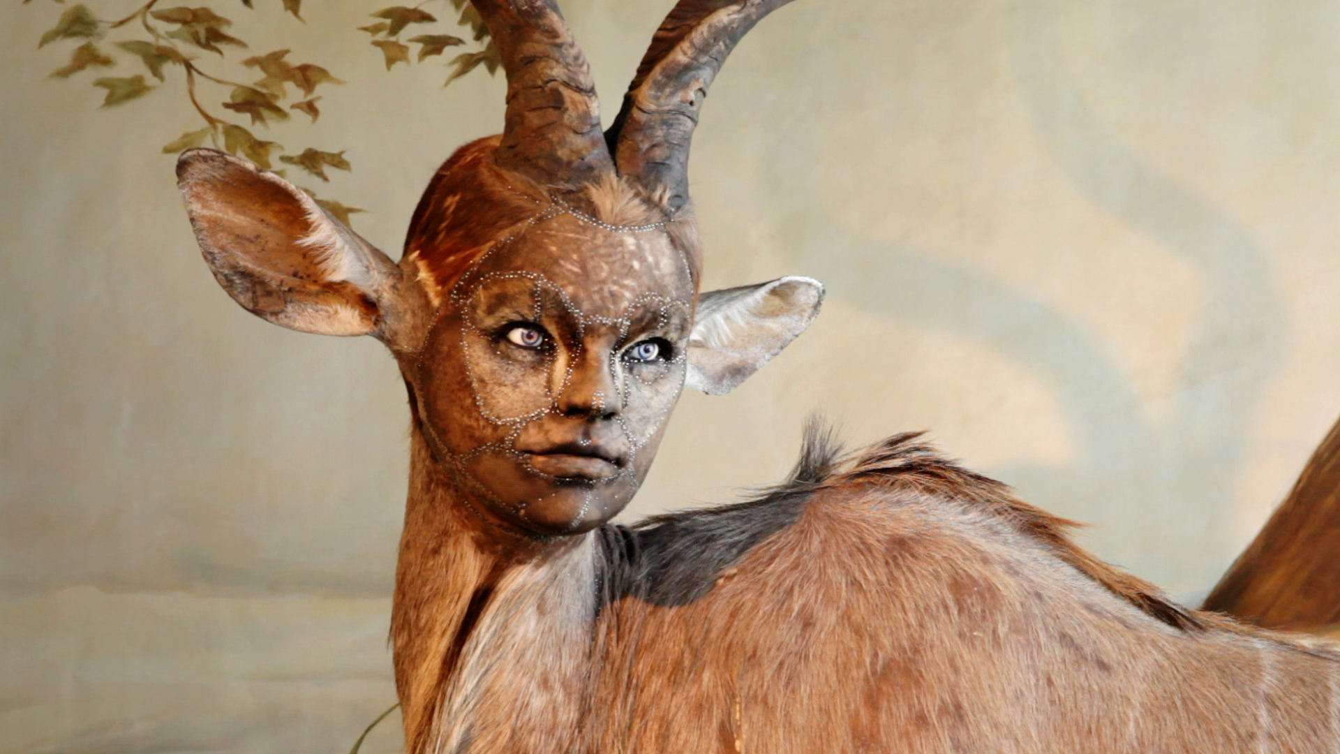 human looking faces on animal bodies taxidermy as art