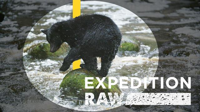 video expedition sciex exraw bertie gregory bear salmon
