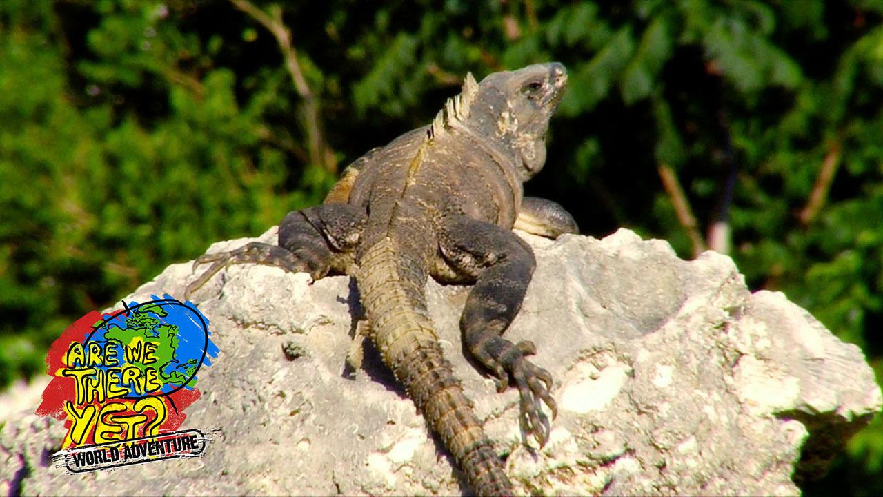 chameleon animal profile
