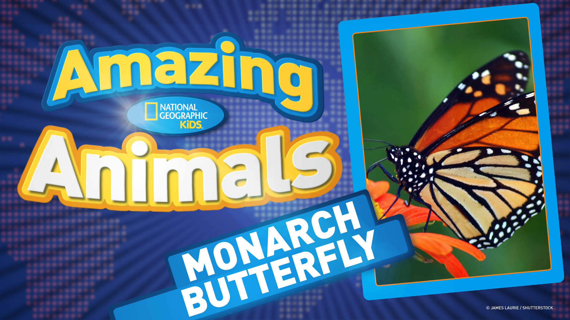monarch butterfly monarch butterfly ep 18