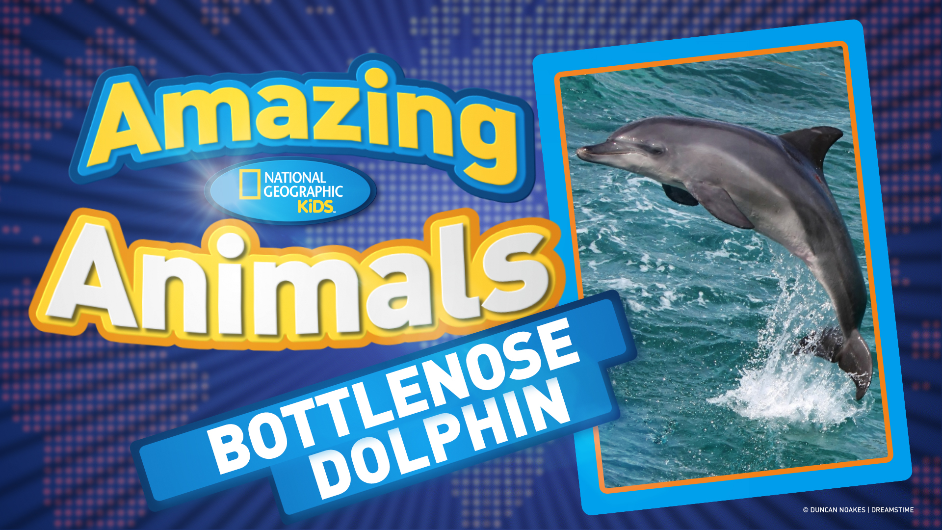 an analysis of the bottle nosed dolphin in the research of sea animals The migration route of the bottlenose dolphin between a bottle-nosed dolphin & a porpoise wildlife and exotic animals the migration route of the bottlenose.