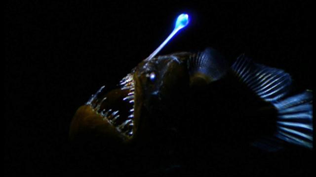 world's weirdest: weird killer of the deep, Reel Combo