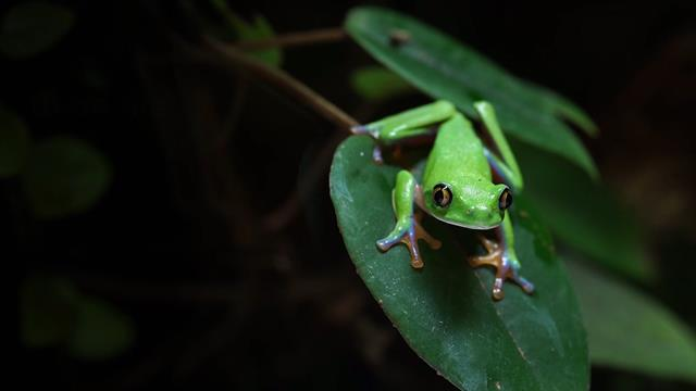 Amphibian Pictures Facts