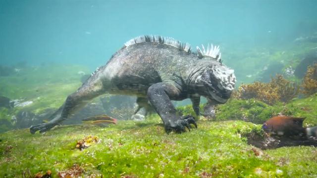 Green Iguana National Geographic
