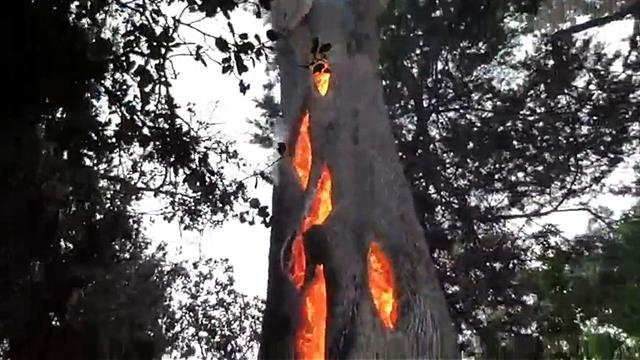 Watch An Eerie Tree Burning From The Inside In California