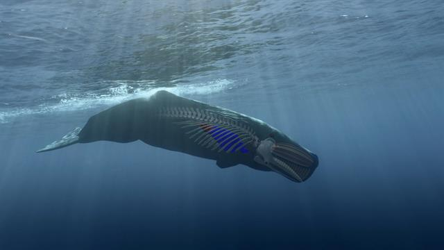 Most Marine Mammals Are Missing One Mysterious Gene