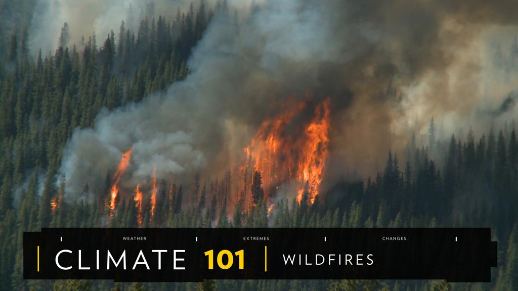 Wildfire safety tips, facts, and information
