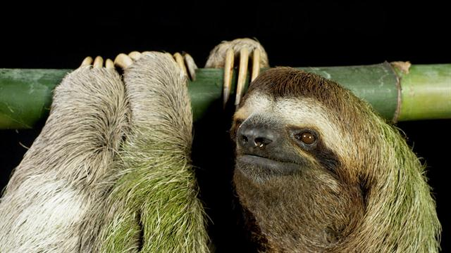 Video For Kids On Sloths