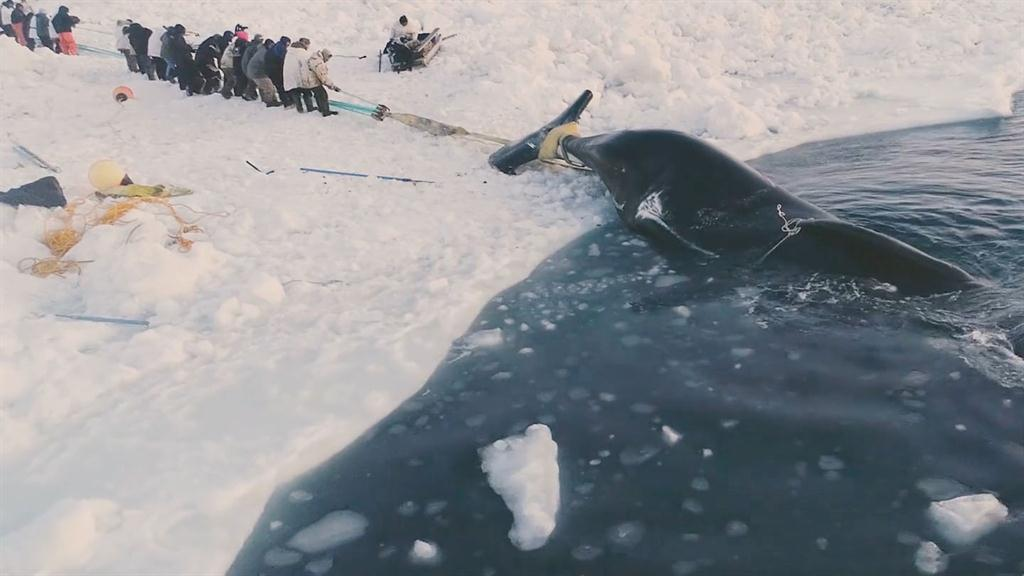 Experience a traditional whale hunt in northern Alaska