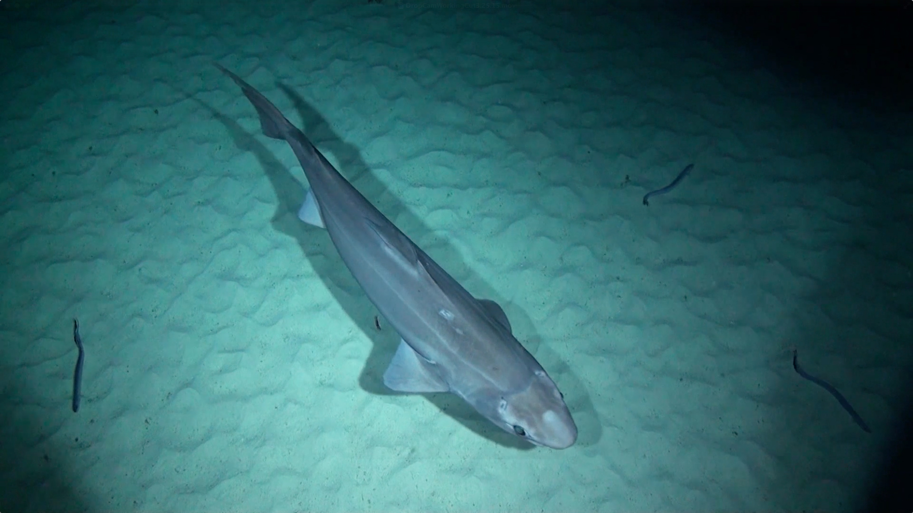 Exclusive Deep Sea Sharks And More Spotted By New Camera
