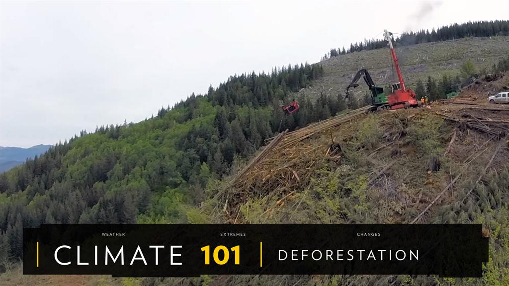 Deforestation facts and information