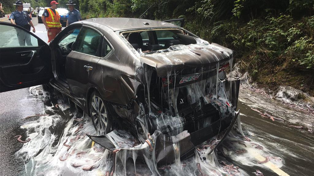 Slime Eels' Explode on Highway After Bizarre Traffic Accident
