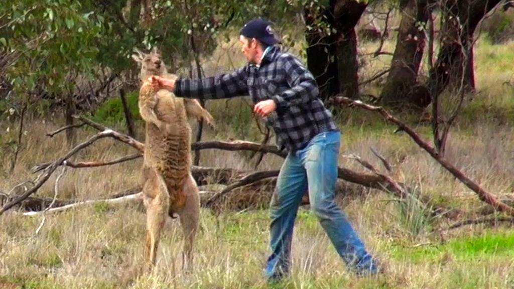 Man Who Punched Kangaroo to Save His Dog Risked His Life