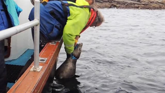 Watch Rescuers Free Seal Trapped by Fishing Line