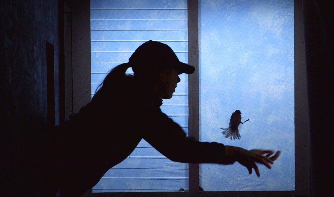 How Better Glass Can Save Hundreds Of Millions Of Birds A Year - Window stickers to deter birdsstickers to prevent birds flying into windows popular bird