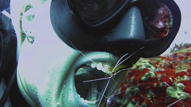Photos: Thick Green Algae Chokes Beach—Swimmers Dive In