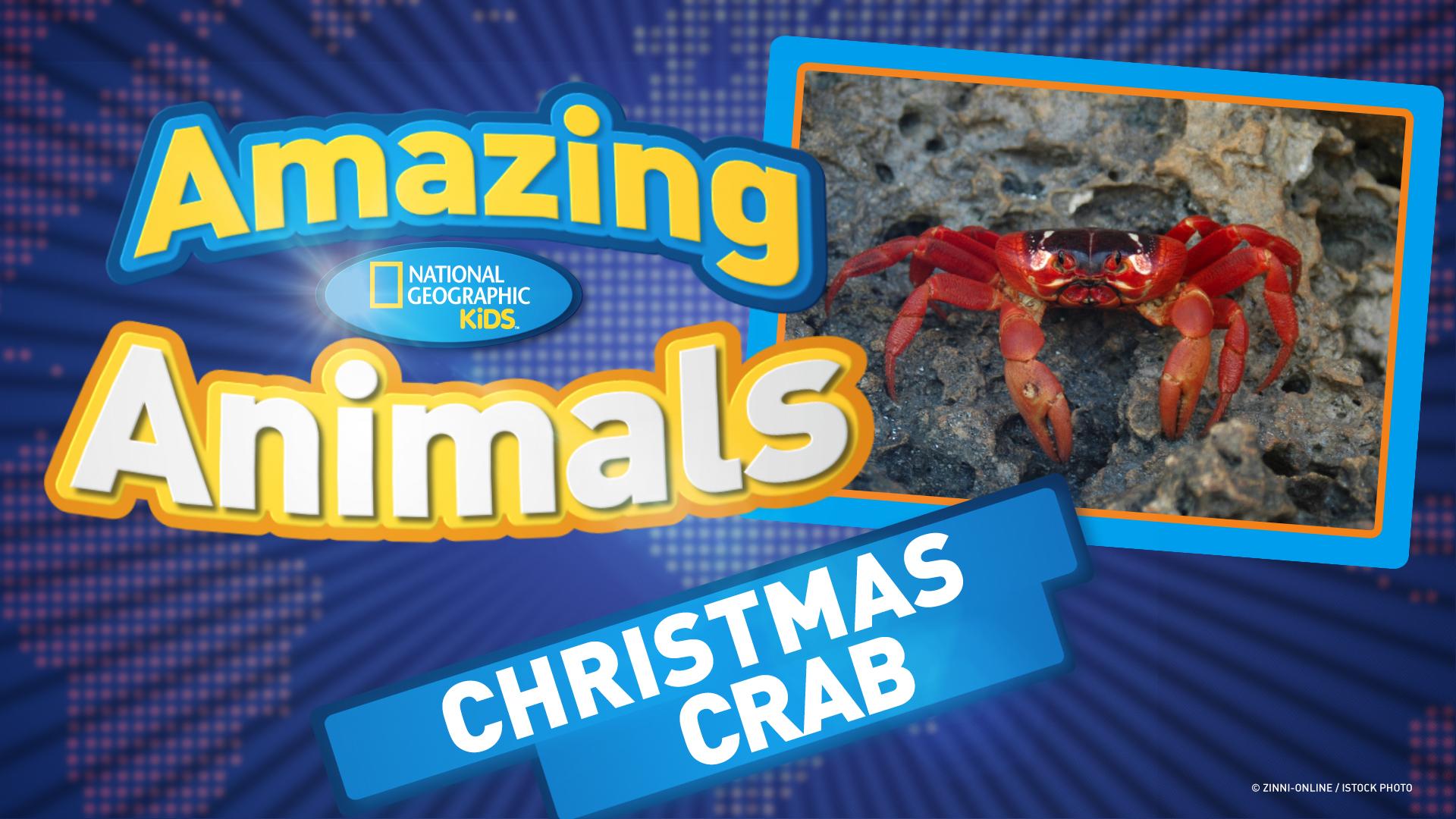 christmas crabs ep 40