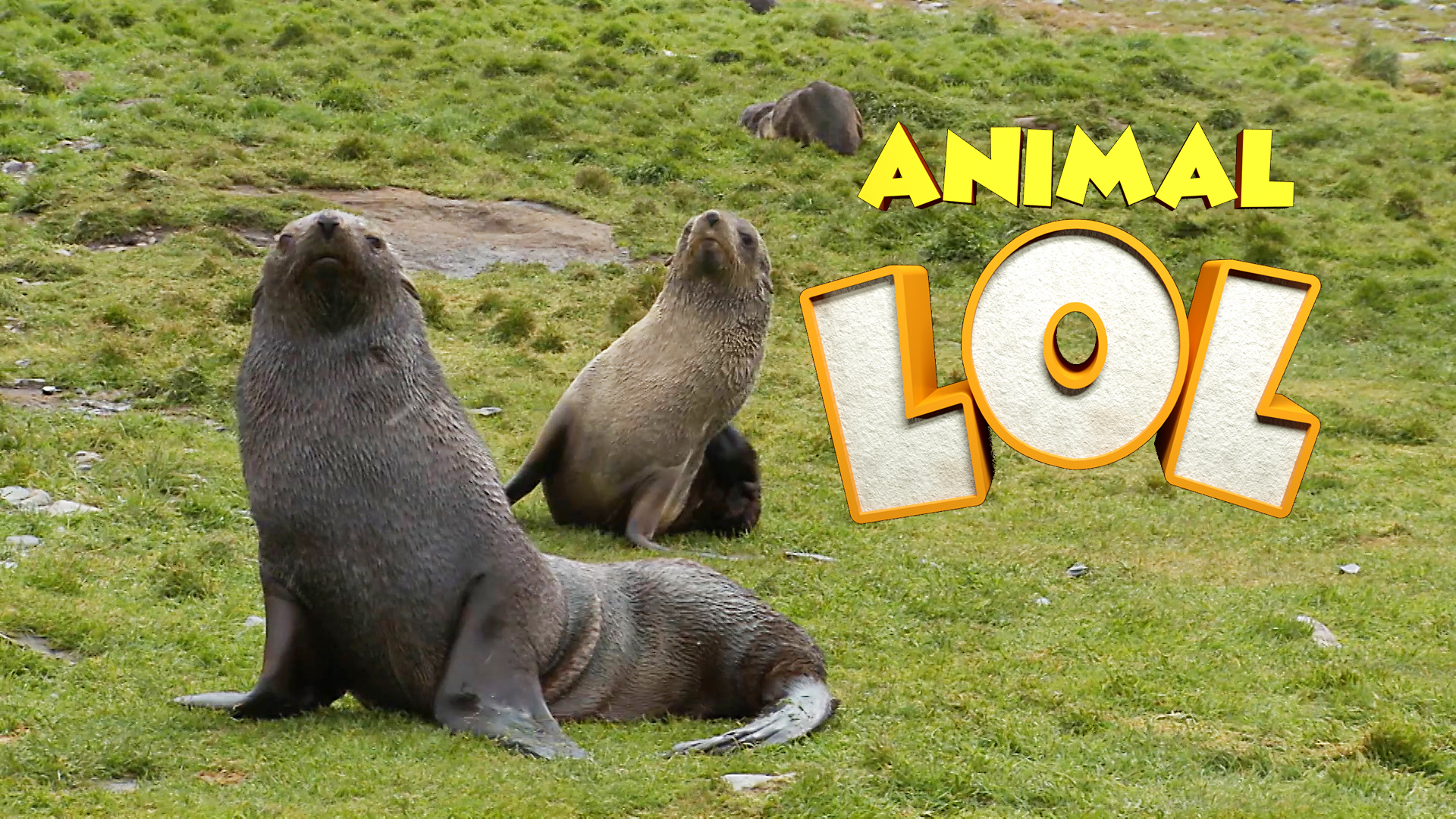 Laughing Face Sea Lion Animal Funnypictures | www ... - photo#30