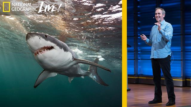 Great White And Oceanic Whitetip Sharks Photographing The Oceans Top Predators Part 3