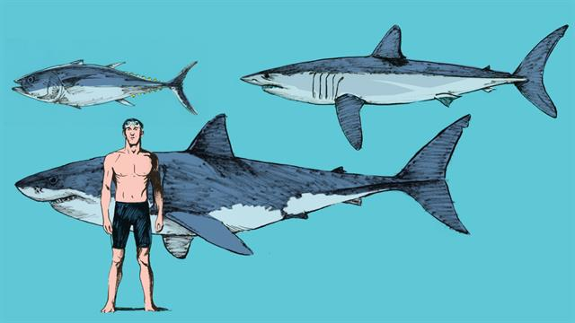 what makes mako sharks the fastest sharks in the ocean