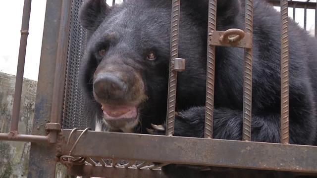 How a Family in China Mistook an Asiatic Black Bear for a Dog