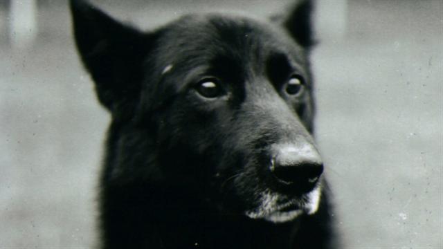 Beautiful War Army Adorable Dog - ds_wardogs_mielniczuk_640x360_287228483846  Snapshot_921827  .jpg