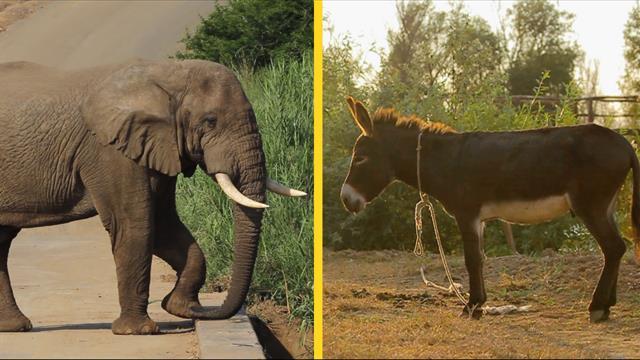 Elephant Or Donkey How Animals Became Us Political Symbols