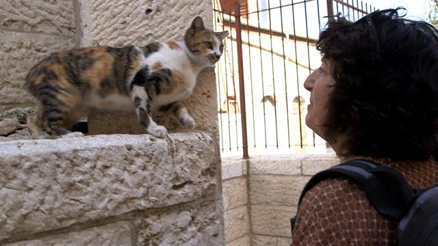 08004f182b Holy Cats! Jerusalem s Strays and Their Unsung Guardian