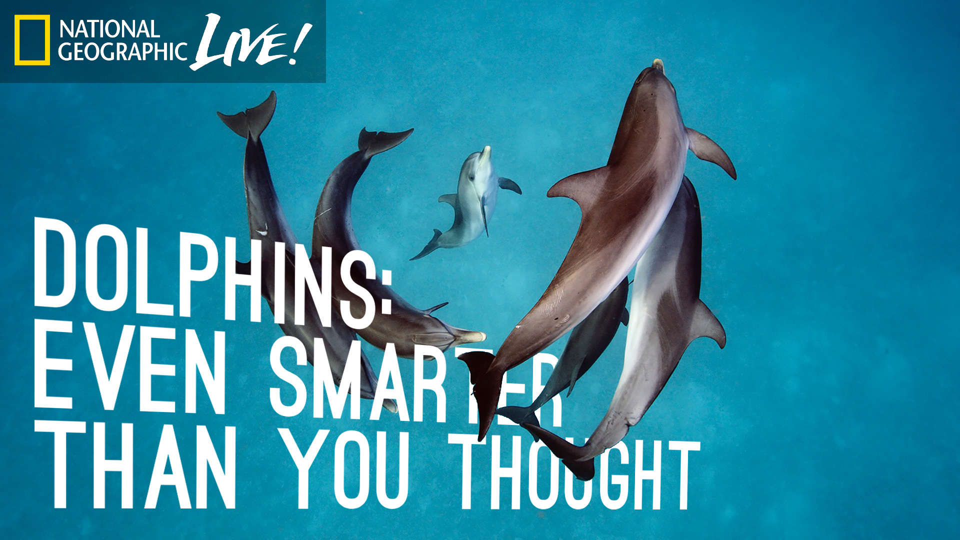 8d3a6209 Dolphins: Even Smarter Than You Thought