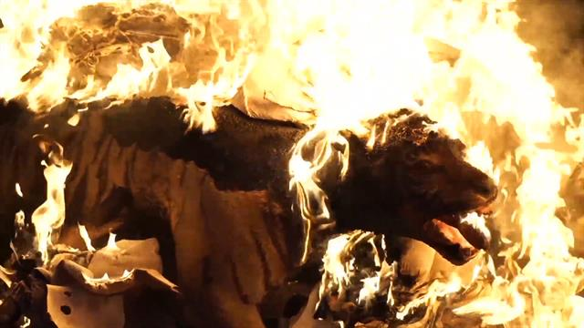 Watch Wildlife Crime Evidence Go Up in Flames to Protect Species