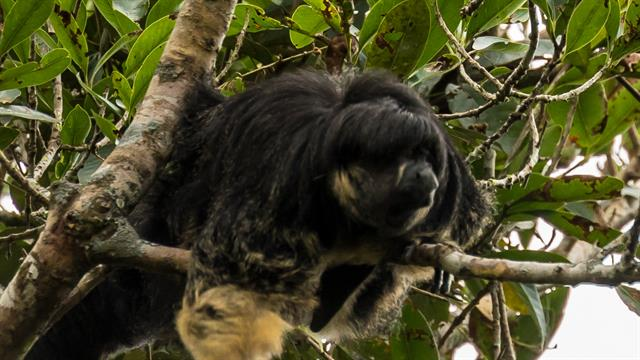 Mysterious Amazon Animal Seen Alive for First Time in 80 Years