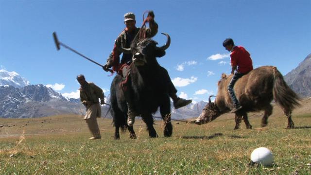 yak polo draws tourists to remote pakistan village