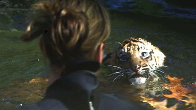 Tiger Cubs Pass Swim Test