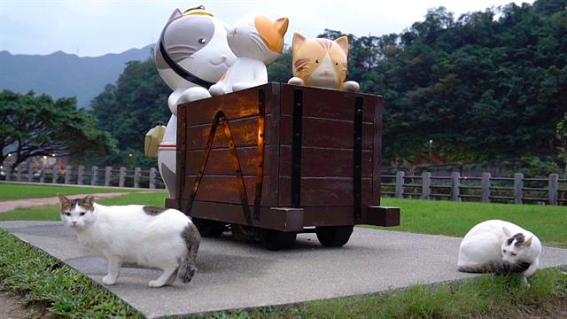 Look Inside Taiwan's 'Cat Village' - National Geographic 2018-08-20 10:15