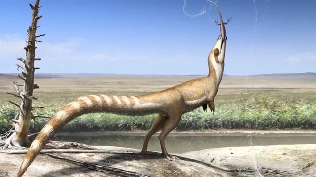 Dinosaur May Have Looked Like a Raccoon