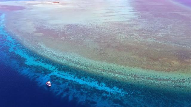 These 38 Coral Reefs Are Thriving, Despite Threats