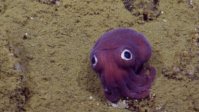Watch A Googly Eyed Sea Creature Crack Up Scientists