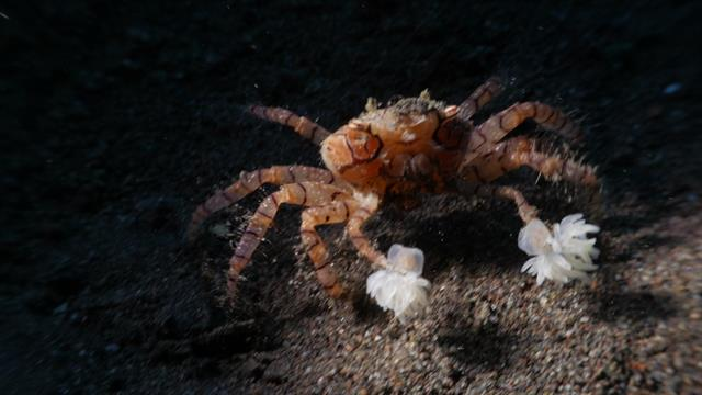 Watch These Crabs Tear Their Living