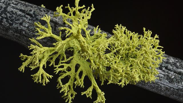 What's in a Lichen? How Scientists Got It Wrong for 150 Years  What's in a...
