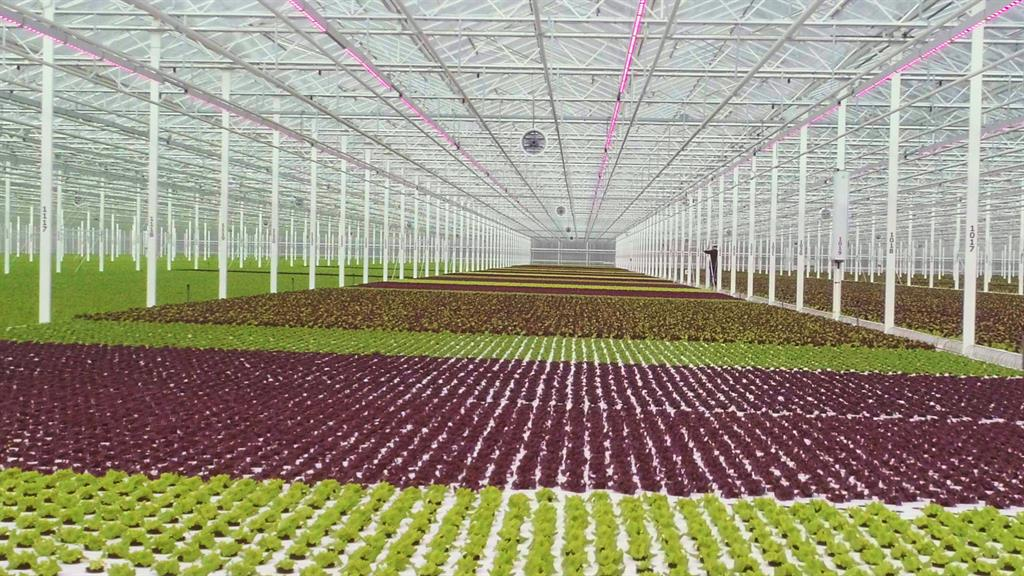 28+Greenhouse Companies Near Me