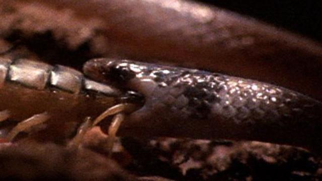 Black anaconda vs black boa - 2 part 1