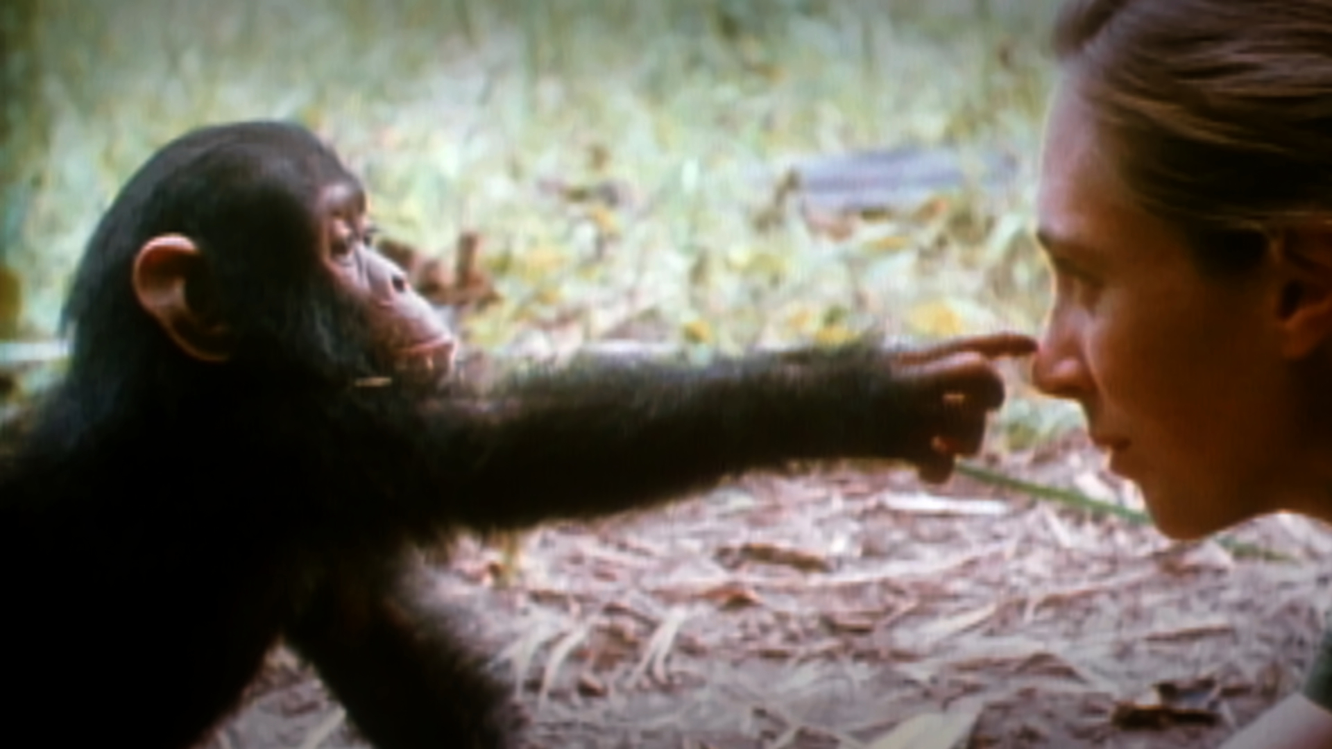 the amazing life of jane goodall the famous biologist List of famous female biologists ended up doing with their life the best your mom jokes in internet history famous male ski jumpers famous female.