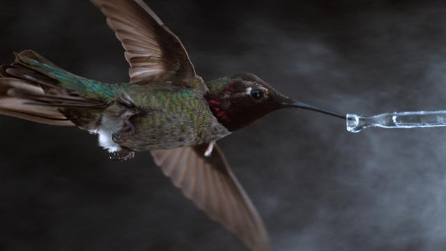 See Hummingbirds Fly Shake Drink In Amazing Slow Motion