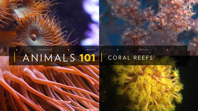 Coral Reefs 101