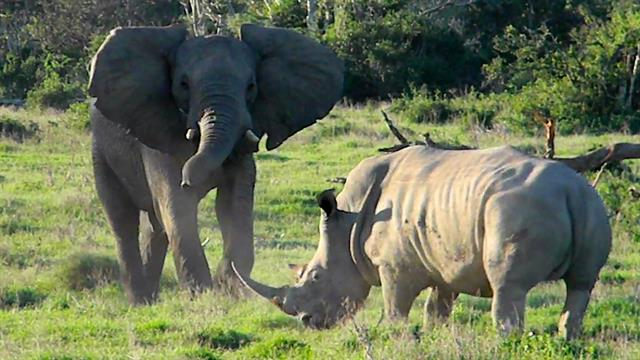 Slonovi - Page 5 170228-kruger-elephant-vs-rhino-vin_640x360_886835267762