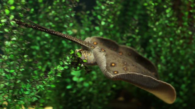 new discovery watch how stingrays eat. Black Bedroom Furniture Sets. Home Design Ideas