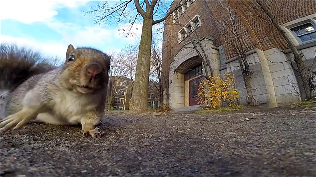 Quirky Squirrel Behaviors You Can See This Fall